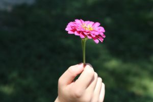 Child's hand holding pink flower to the sun, symbolizing enriching your life